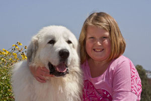 Great Pyrenees Charley