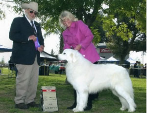 Great Pyrenees Catch