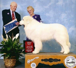 Great Pyrenees Halsey