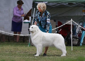 Great Pyrenees Nana