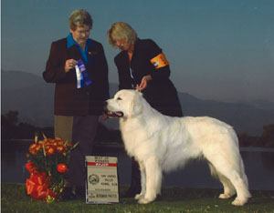 Great Pyrenees Peace