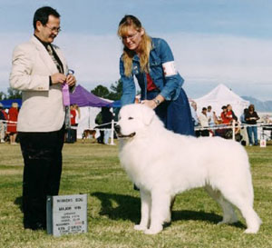 Great Pyrenees Shaman